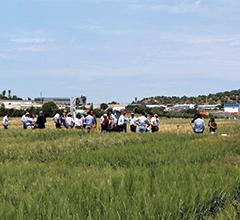 Campo de trigo na ENMP